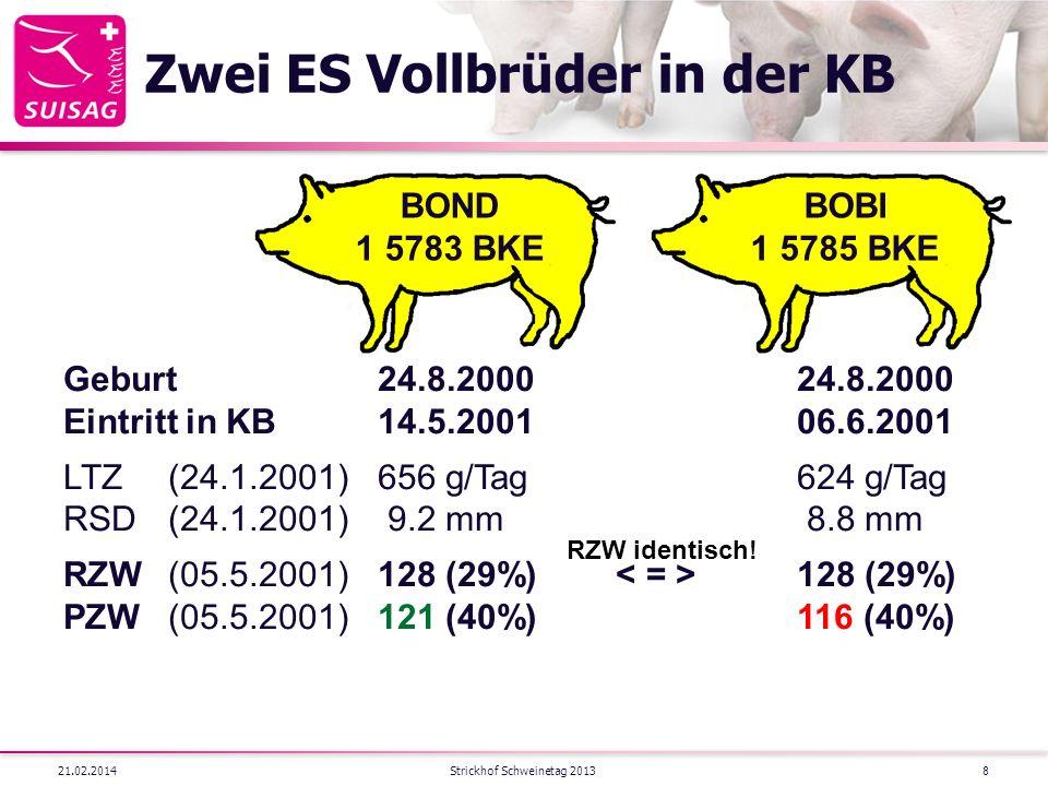 Zwei ES Vollbrüder in der KB 21.02.2014Strickhof Schweinetag 20138 BOBI 1 5785 BKE BOND 1 5783 BKE Geburt24.8.200024.8.2000 Eintritt in KB14.5.200106.6.2001 LTZ(24.1.2001)656 g/Tag624 g/Tag RSD(24.1.2001) 9.2 mm 8.8 mm RZW(05.5.2001)128 (29%) 128 (29%) PZW(05.5.2001)121 (40%)116 (40%) RZW identisch!