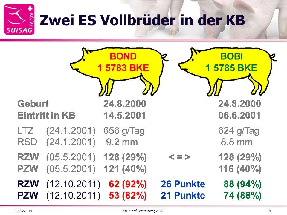 Zwei ES Vollbrüder in der KB 21.02.2014Strickhof Schweinetag 20139 BOBI 1 5785 BKE BOND 1 5783 BKE Geburt24.8.200024.8.2000 Eintritt in KB14.5.200106.6.2001 LTZ(24.1.2001)656 g/Tag624 g/Tag RSD(24.1.2001) 9.2 mm 8.8 mm RZW(05.5.2001)128 (29%) 128 (29%) PZW(05.5.2001)121 (40%)116 (40%) Geburt24.8.200024.8.2000 Eintritt in KB14.5.200106.6.2001 LTZ(24.1.2001)656 g/Tag624 g/Tag RSD(24.1.2001) 9.2 mm 8.8 mm RZW(05.5.2001)128 (29%) 128 (29%) PZW(05.5.2001)121 (40%)116 (40%) RZW(12.10.2011) 62 (92%)26 Punkte 88 (94%) PZW(12.10.2011) 53 (82%)21 Punkte 74 (88%)