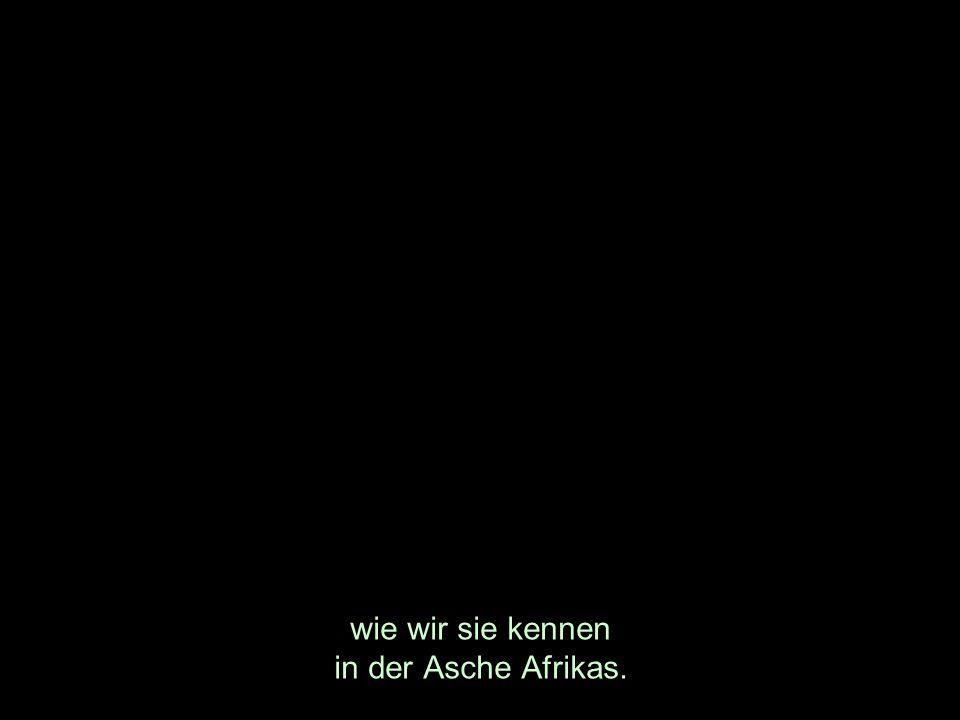 wie wir sie kennen in der Asche Afrikas.