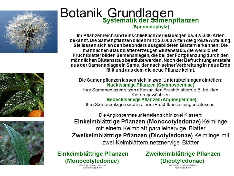 Botanik Grundlagen Systematik der Samenpflanzen (Spermatophyta) Im Pflanzenreich sind einschließlich der Blaualgen ca. 425.000 Arten bekannt. Die Same