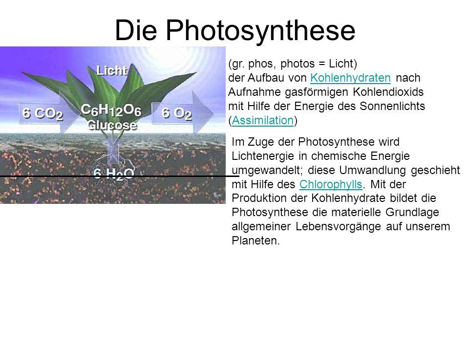 Die Photosynthese (gr. phos, photos = Licht) der Aufbau von Kohlenhydraten nach Aufnahme gasförmigen Kohlendioxids mit Hilfe der Energie des Sonnenlic