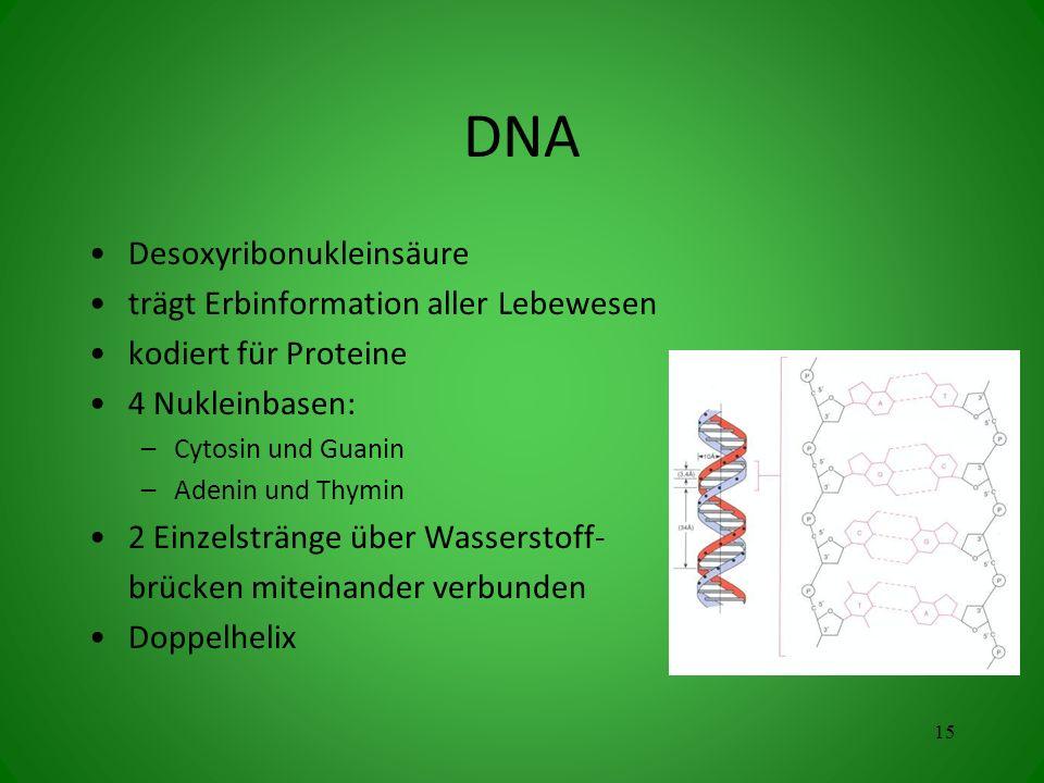 DNA Desoxyribonukleinsäure trägt Erbinformation aller Lebewesen kodiert für Proteine 4 Nukleinbasen: –Cytosin und Guanin –Adenin und Thymin 2 Einzelst