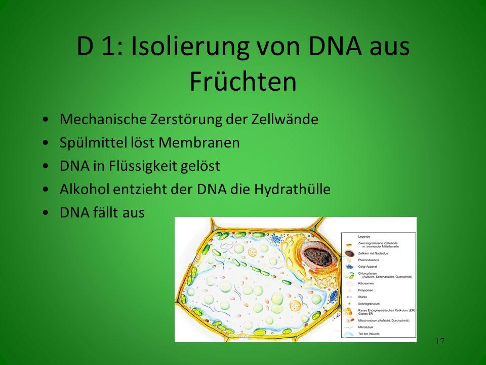 D 1: Isolierung von DNA aus Früchten Mechanische Zerstörung der Zellwände Spülmittel löst Membranen DNA in Flüssigkeit gelöst Alkohol entzieht der DNA die Hydrathülle DNA fällt aus 17
