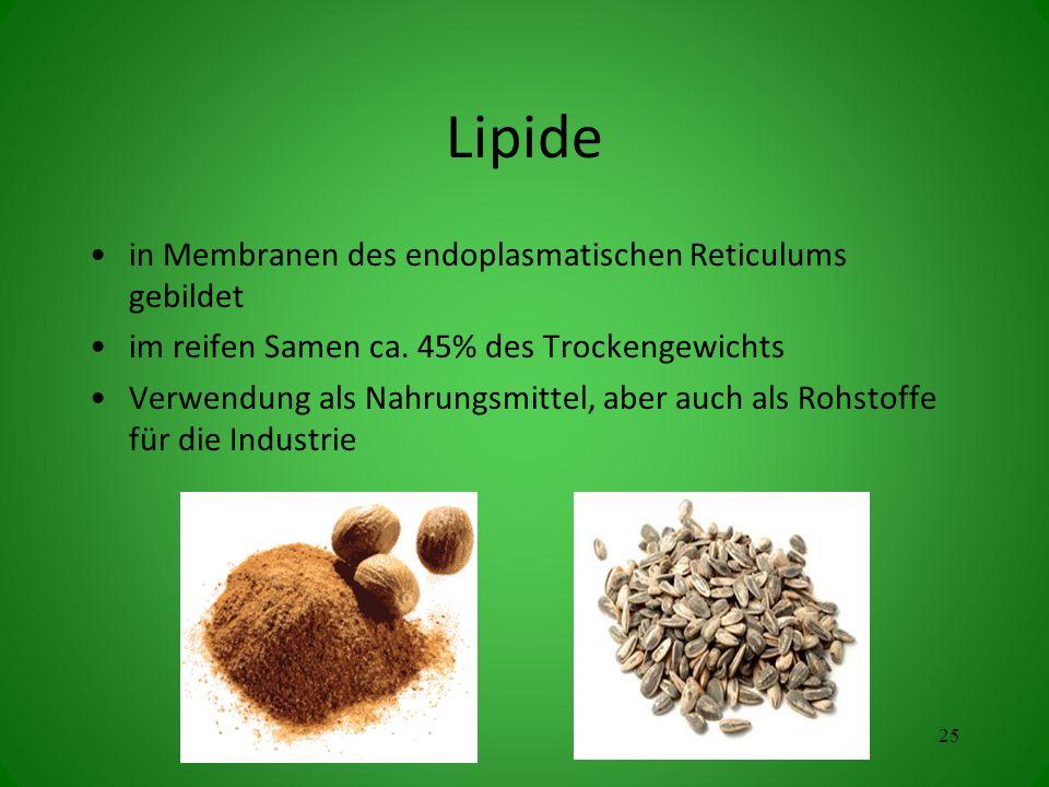 Lipide in Membranen des endoplasmatischen Reticulums gebildet im reifen Samen ca. 45% des Trockengewichts Verwendung als Nahrungsmittel, aber auch als