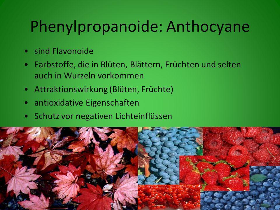 Phenylpropanoide: Anthocyane sind Flavonoide Farbstoffe, die in Blüten, Blättern, Früchten und selten auch in Wurzeln vorkommen Attraktionswirkung (Blüten, Früchte) antioxidative Eigenschaften Schutz vor negativen Lichteinflüssen 38
