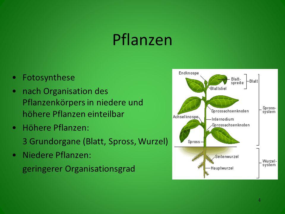 Pflanzen Fotosynthese nach Organisation des Pflanzenkörpers in niedere und höhere Pflanzen einteilbar Höhere Pflanzen: 3 Grundorgane (Blatt, Spross, Wurzel) Niedere Pflanzen: geringerer Organisationsgrad 4