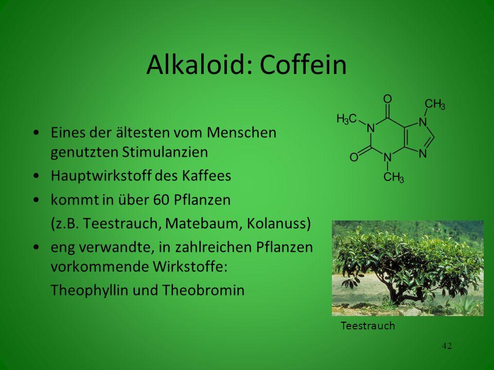Alkaloid: Coffein Eines der ältesten vom Menschen genutzten Stimulanzien Hauptwirkstoff des Kaffees kommt in über 60 Pflanzen (z.B. Teestrauch, Mateba