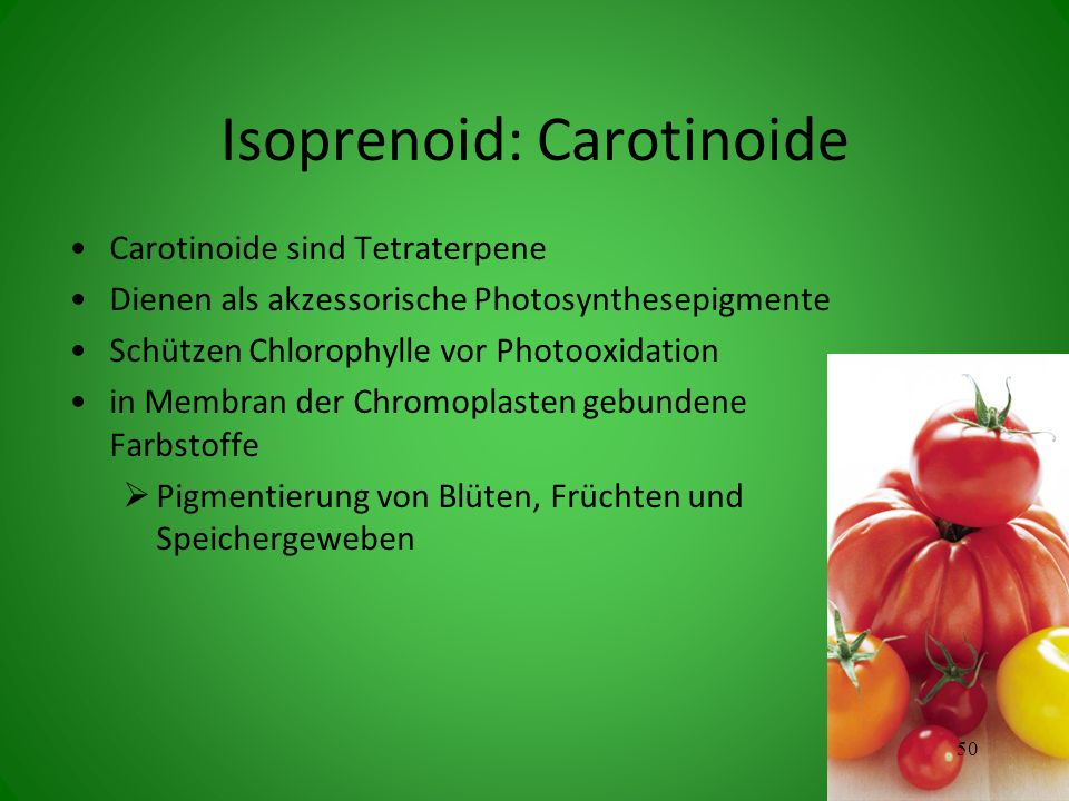 Isoprenoid: Carotinoide Carotinoide sind Tetraterpene Dienen als akzessorische Photosynthesepigmente Schützen Chlorophylle vor Photooxidation in Membran der Chromoplasten gebundene Farbstoffe Pigmentierung von Blüten, Früchten und Speichergeweben 50
