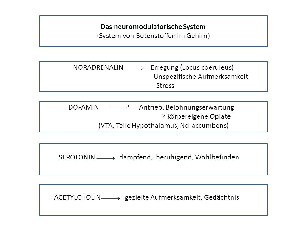 Das neuromodulatorische System (System von Botenstoffen im Gehirn) NORADRENALIN Erregung (Locus coeruleus) Unspezifische Aufmerksamkeit Stress DOPAMIN Antrieb, Belohnungserwartung körpereigene Opiate (VTA, Teile Hypothalamus, Ncl accumbens) SEROTONINdämpfend, beruhigend, Wohlbefinden ACETYLCHOLIN gezielte Aufmerksamkeit, Gedächtnis