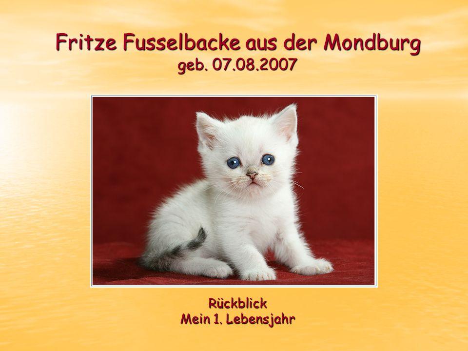 Fritze Fusselbacke aus der Mondburg geb. 07.08.2007 Rückblick Mein 1. Lebensjahr