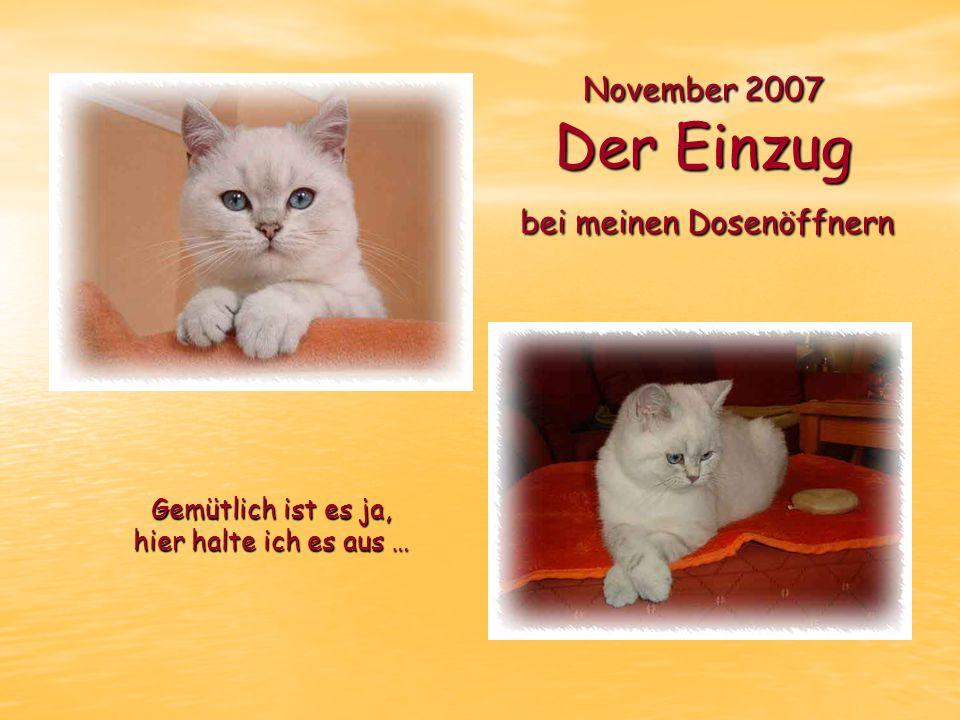 November 2007 Der Einzug bei meinen Dosenöffnern Gemütlich ist es ja, hier halte ich es aus …