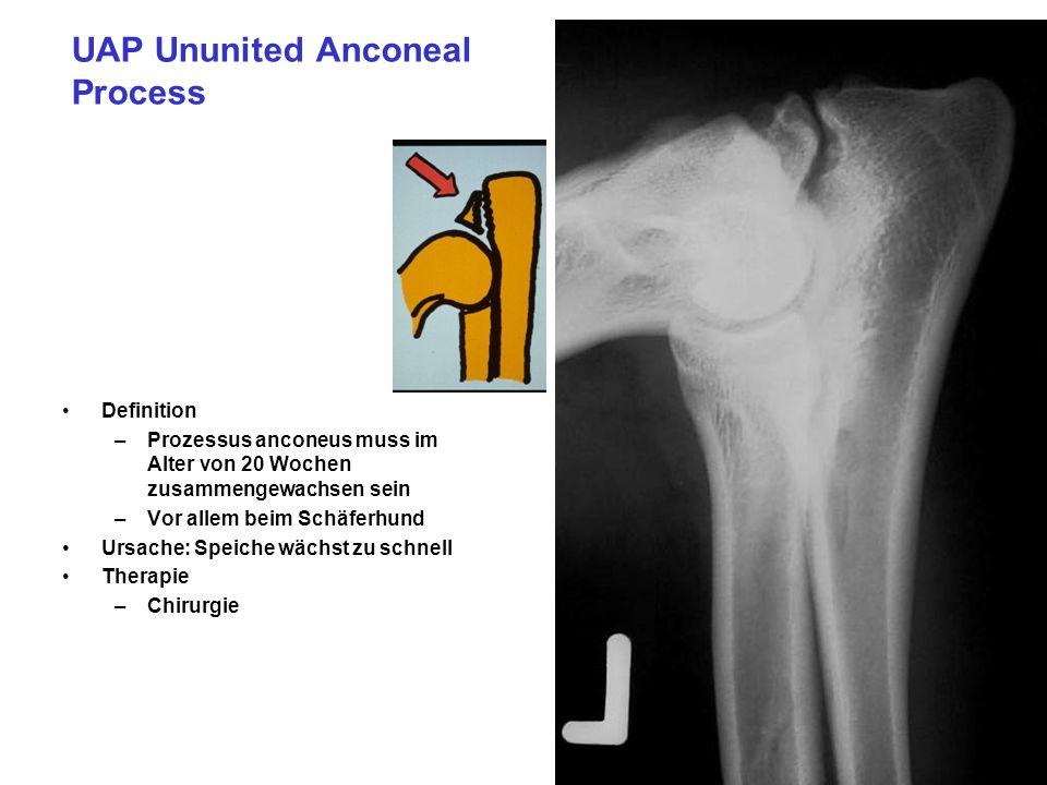 UAP Ununited Anconeal Process Definition –Prozessus anconeus muss im Alter von 20 Wochen zusammengewachsen sein –Vor allem beim Schäferhund Ursache: Speiche wächst zu schnell Therapie –Chirurgie
