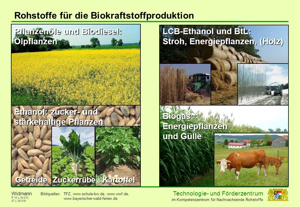 Technolog ie - und För der zent r um im Kompetenzzentrum für Nachwachsende Rohstoffe P 10 L Wi 010 Rohstoffe für die Biokraftstoffproduktion 07 L Wi 0