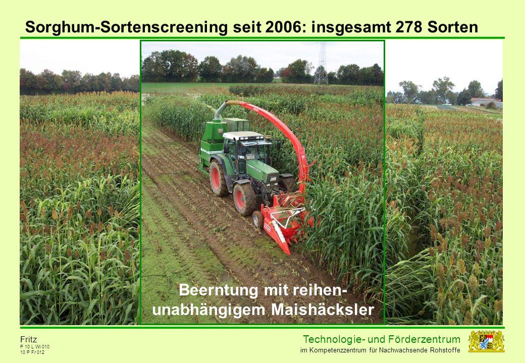 Technolog ie - und För der zent r um im Kompetenzzentrum für Nachwachsende Rohstoffe P 10 L Wi 010 10 P Fr 012 Fritz Sorghum-Sortenscreening seit 2006