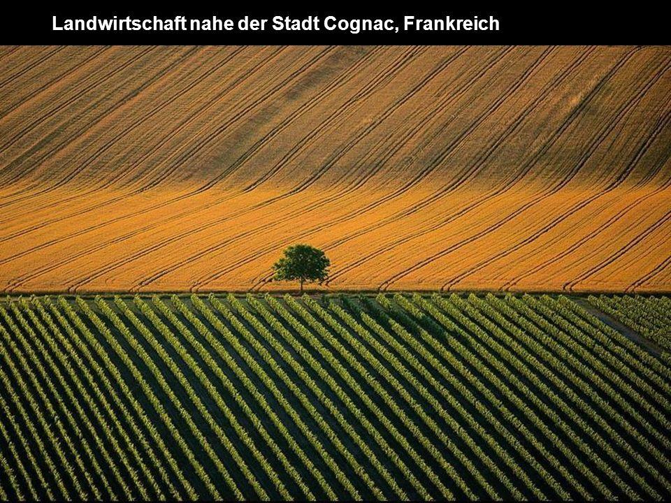 Landwirtschaft nahe der Stadt Cognac, Frankreich