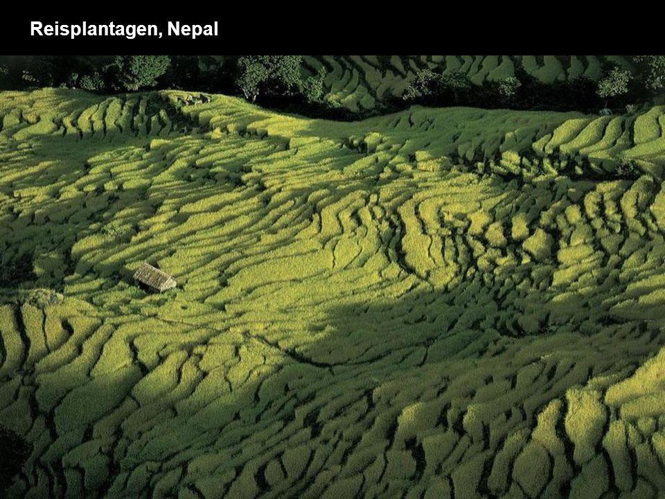 Reisplantagen, Nepal