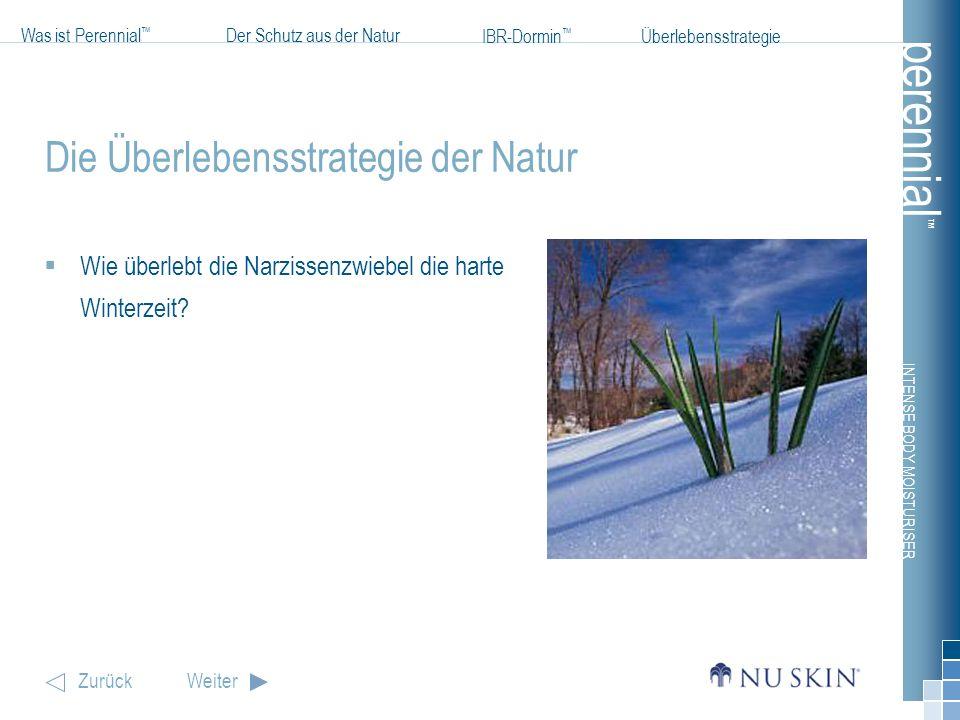 INTENSE BODY MOISTURISER Was ist Perennial Der Schutz aus der Natur IBR-Dormin ZurückWeiter Überlebensstrategie perennial Die Überlebensstrategie der Natur Im Winter befindet sich die Blumenzwiebel in Ruhephase.