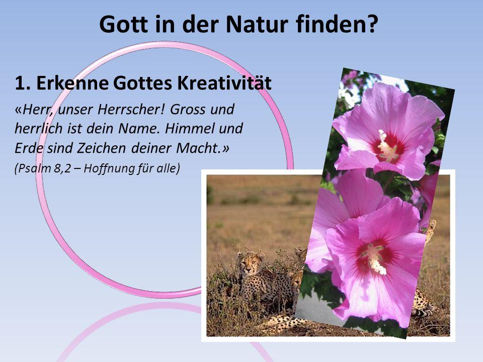 Gott in der Natur finden.1. Erkenne Gottes Kreativität «Aus dem Mund der Kinder erklingt dein Lob.