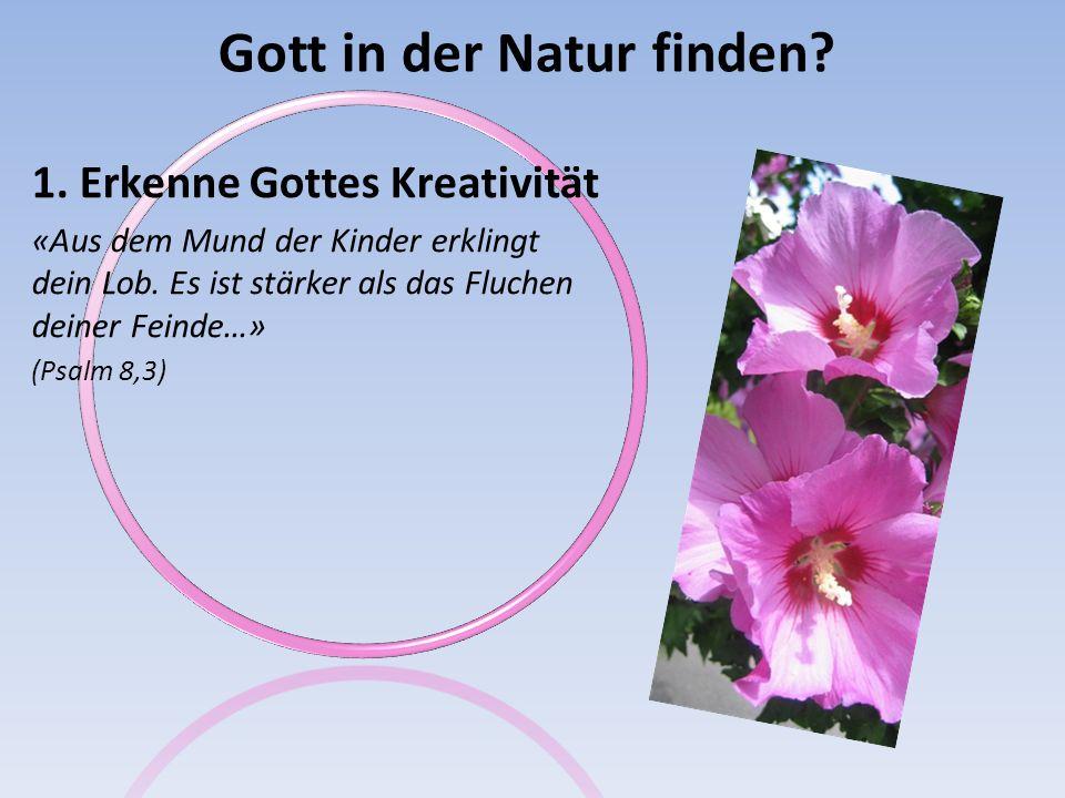 Gott in der Natur finden.1.