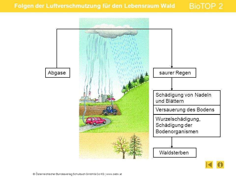 © Österreichischer Bundesverlag Schulbuch GmbH & Co KG | www.oebv.at BioTOP 2 Folgen der Luftverschmutzung für den Lebensraum Wald Abgasesaurer Regen Schädigung von Nadeln und Blättern Versauerung des Bodens Wurzelschädigung, Schädigung der Bodenorganismen Waldsterben