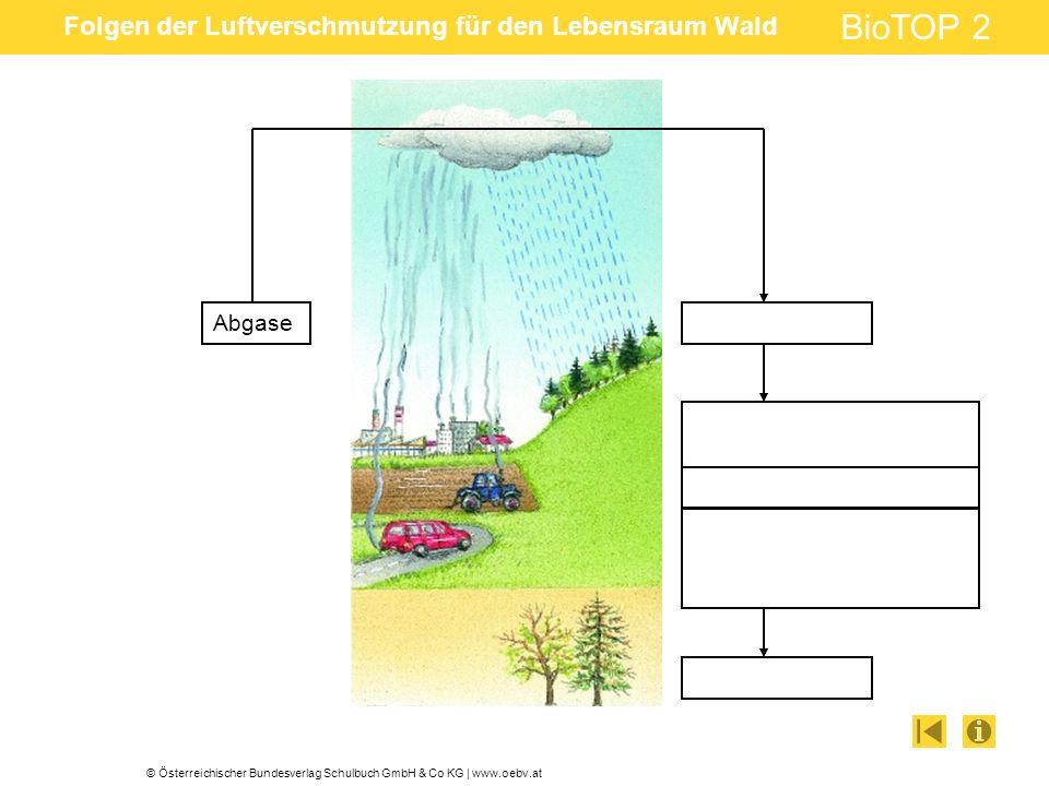 © Österreichischer Bundesverlag Schulbuch GmbH & Co KG | www.oebv.at BioTOP 2 Folgen der Luftverschmutzung für den Lebensraum Wald Abgase