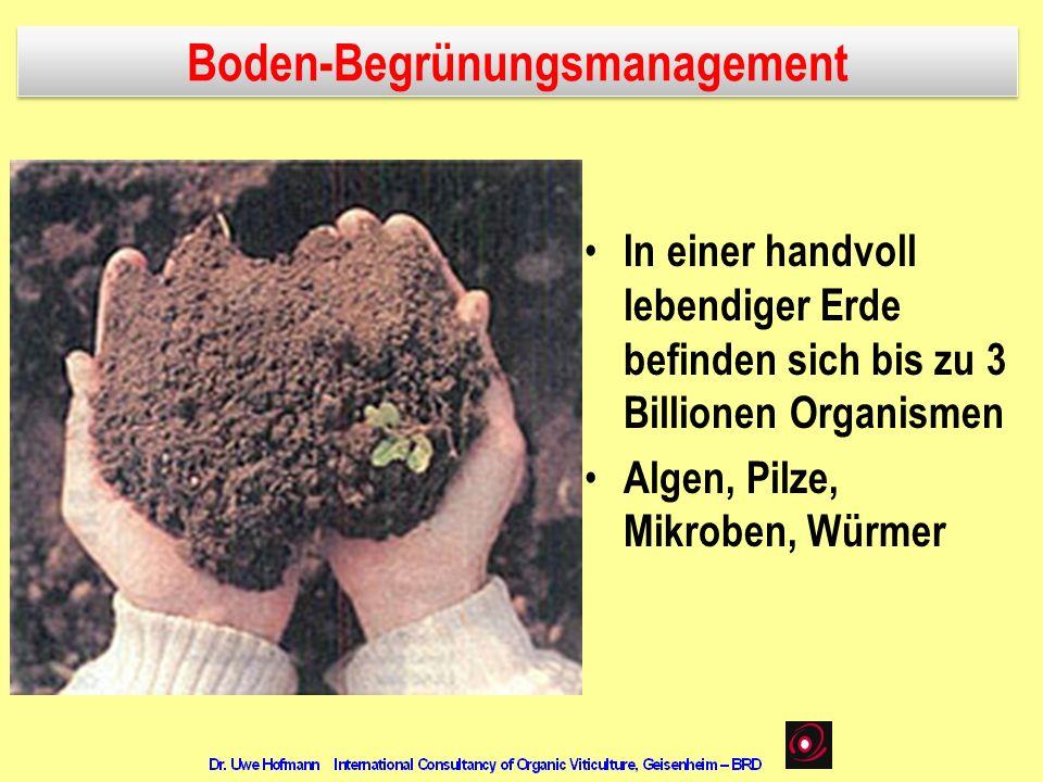 In einer handvoll lebendiger Erde befinden sich bis zu 3 Billionen Organismen Algen, Pilze, Mikroben, Würmer Boden-Begrünungsmanagement