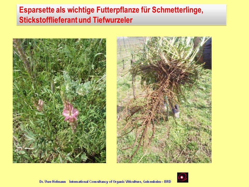 Esparsette als wichtige Futterpflanze für Schmetterlinge, Stickstofflieferant und Tiefwurzeler Esparsette als wichtige Futterpflanze für Schmetterling