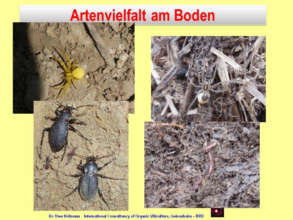 Artenvielfalt am Boden