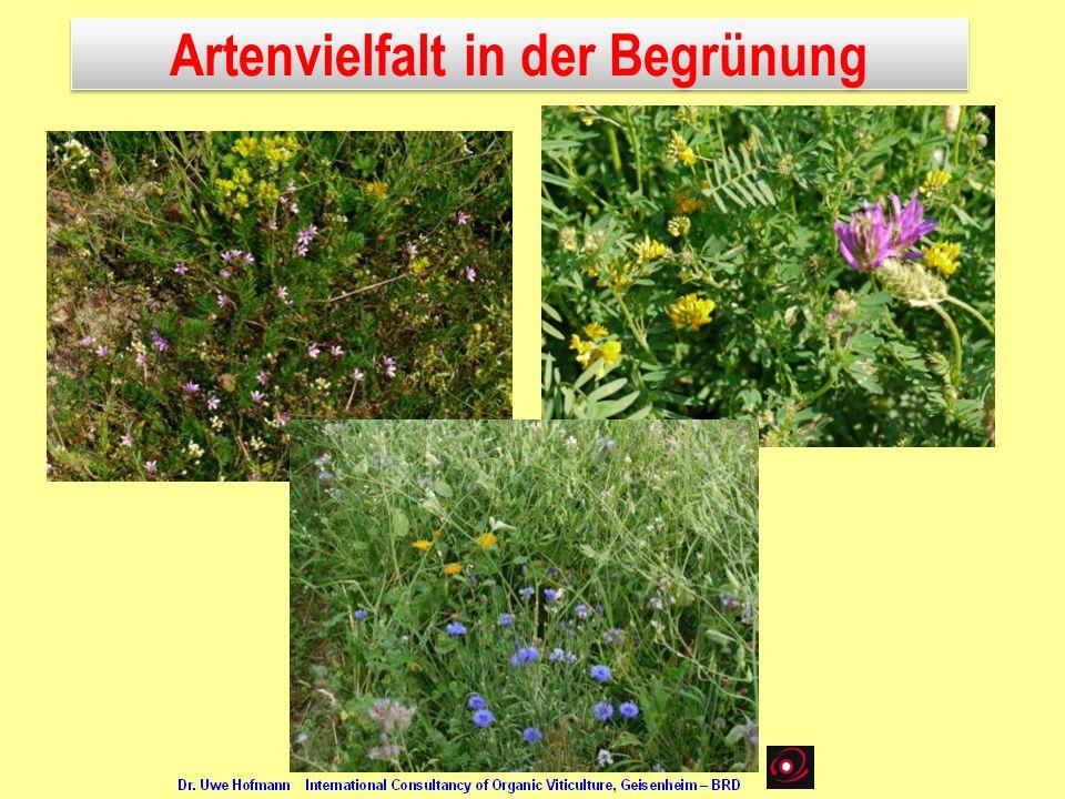 Artenvielfalt in der Begrünung