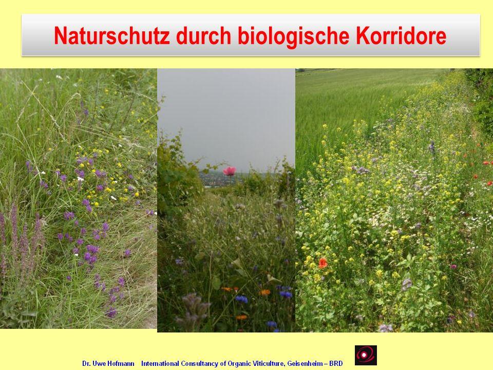 Naturschutz durch biologische Korridore