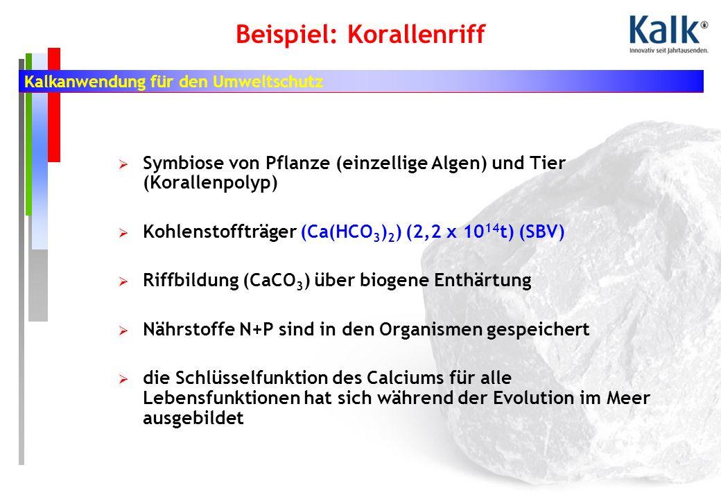 Kalkanwendung für den Umweltschutz Beispiel: Korallenriff Symbiose von Pflanze (einzellige Algen) und Tier (Korallenpolyp) Kohlenstoffträger (Ca(HCO 3 ) 2 ) (2,2 x 10 14 t) (SBV) Riffbildung (CaCO 3 ) über biogene Enthärtung Nährstoffe N+P sind in den Organismen gespeichert die Schlüsselfunktion des Calciums für alle Lebensfunktionen hat sich während der Evolution im Meer ausgebildet