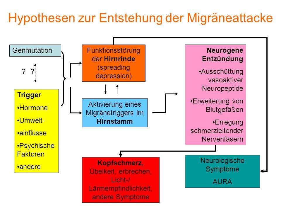 Hypothesen zur Entstehung der Migräneattacke Genmutation Trigger Hormone Umwelt- einflüsse Psychische Faktoren andere Funktionsstörung der Hirnrinde (