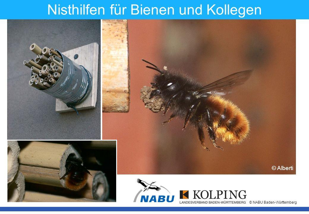 11.11.08MK1 © NABU Baden-Württemberg © Dove © Bohe © König Nisthilfen für Bienen und Kollegen © Alberti