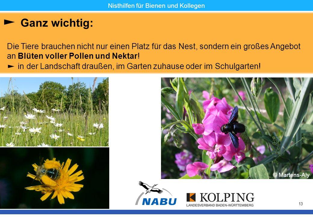 11.11.08MK13 Nisthilfen für Bienen und Kollegen Ganz wichtig: Die Tiere brauchen nicht nur einen Platz für das Nest, sondern ein großes Angebot an Blü