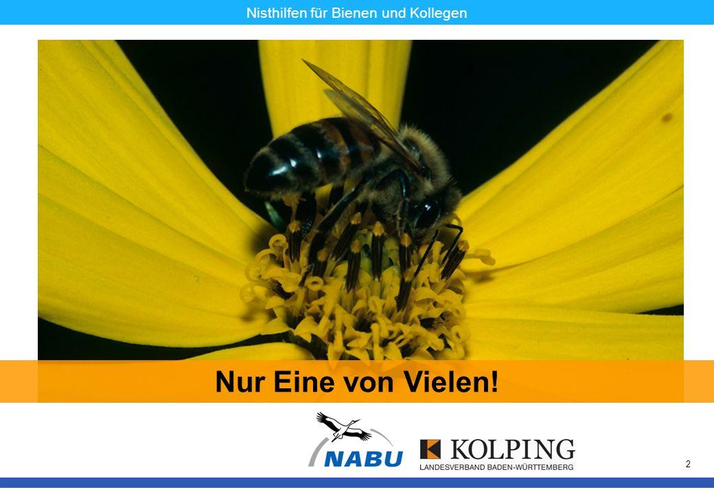 11.11.08MK13 Nisthilfen für Bienen und Kollegen Ganz wichtig: Die Tiere brauchen nicht nur einen Platz für das Nest, sondern ein großes Angebot an Blüten voller Pollen und Nektar.