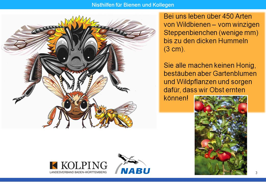 11.11.08MK3 Nisthilfen für Bienen und Kollegen Bei uns leben über 450 Arten von Wildbienen – vom winzigen Steppenbienchen (wenige mm) bis zu den dicke