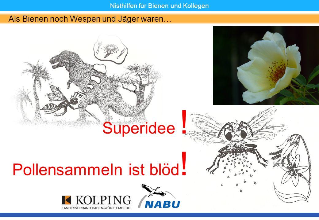 11.11.08MK5 Nisthilfen für Bienen und Kollegen Als Bienen noch Wespen und Jäger waren… Pollensammeln ist blöd ! Superidee !