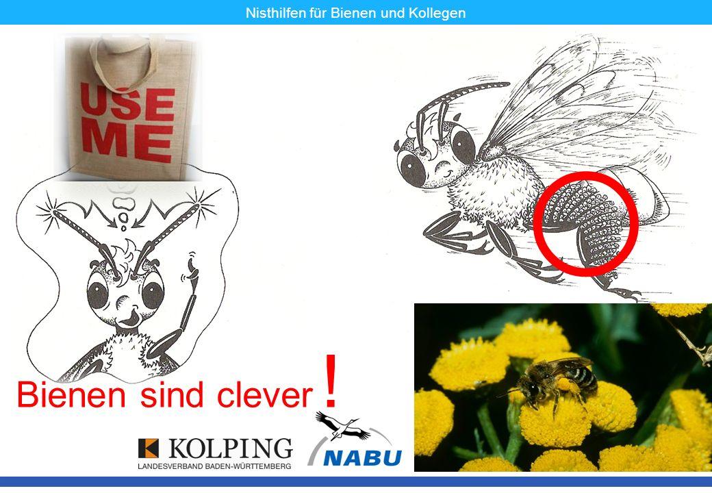 11.11.08MK6 Bienen sind clever ! Nisthilfen für Bienen und Kollegen