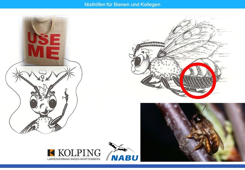 11.11.08MK8 Nisthilfen für Bienen und Kollegen Manche Wildbienen sind Feinschmecker – ungefähr ein Drittel unserer Arten frisst längst nicht alles.