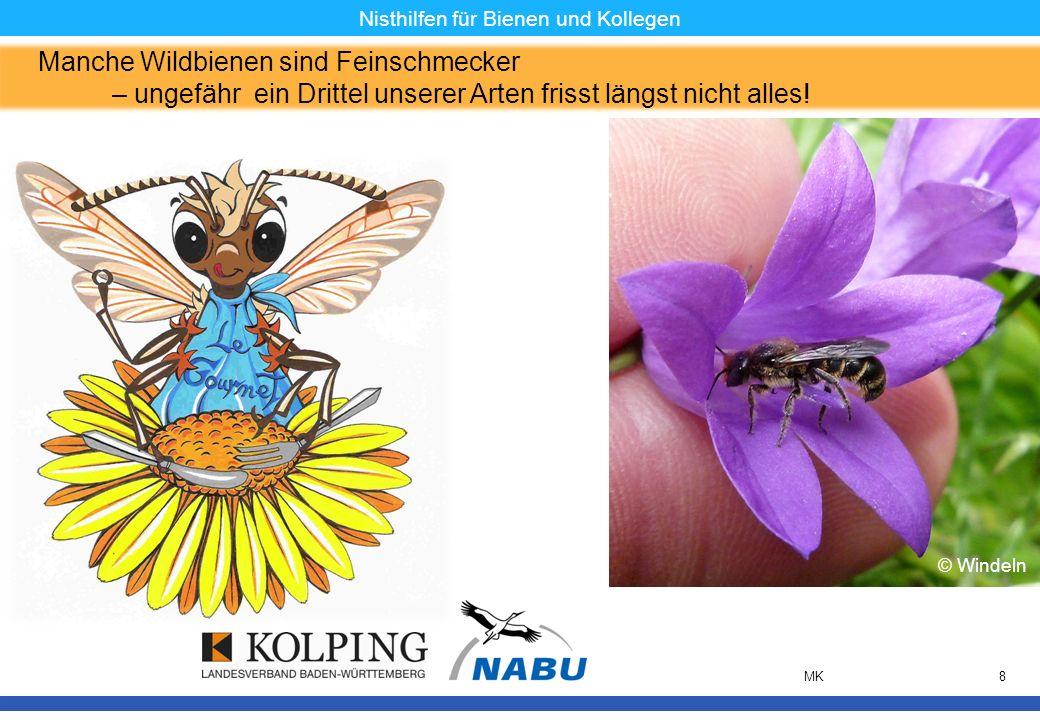 11.11.08MK8 Nisthilfen für Bienen und Kollegen Manche Wildbienen sind Feinschmecker – ungefähr ein Drittel unserer Arten frisst längst nicht alles! ©