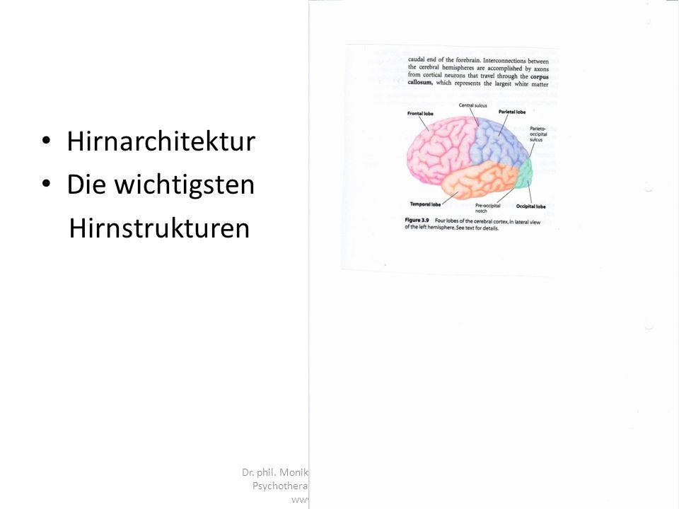 Hirnarchitektur Die wichtigsten Hirnstrukturen Dr.