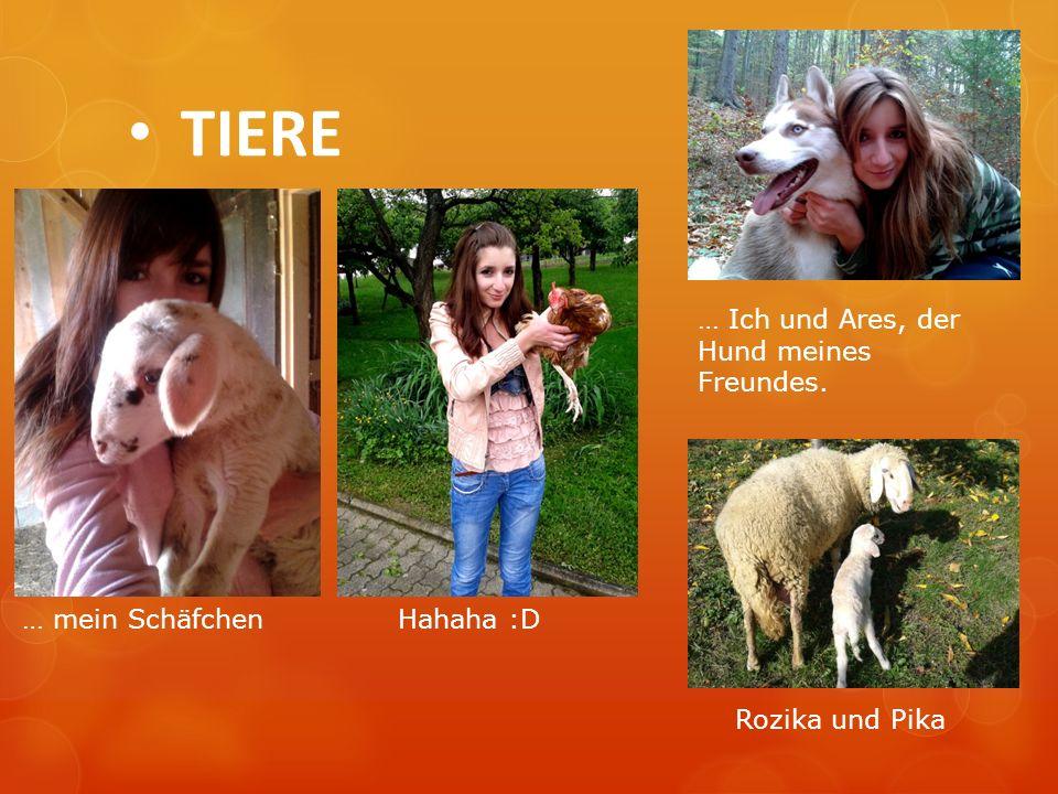 TIERE … Ich und Ares, der Hund meines Freundes. … mein SchäfchenHahaha :D Rozika und Pika