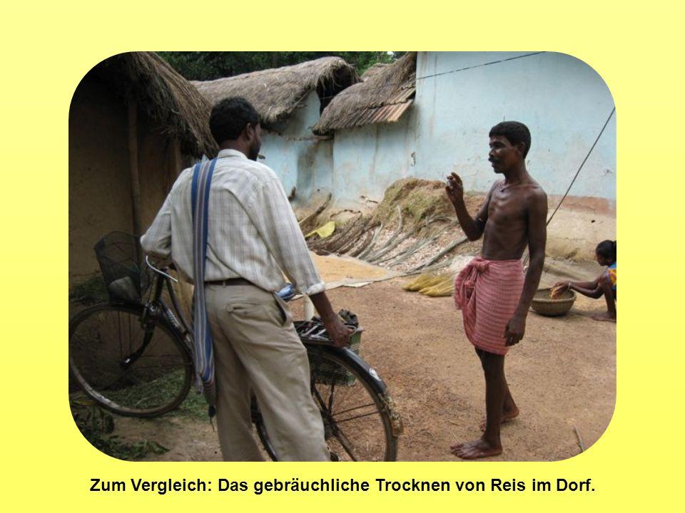 Zum Vergleich: Das gebräuchliche Trocknen von Reis im Dorf.