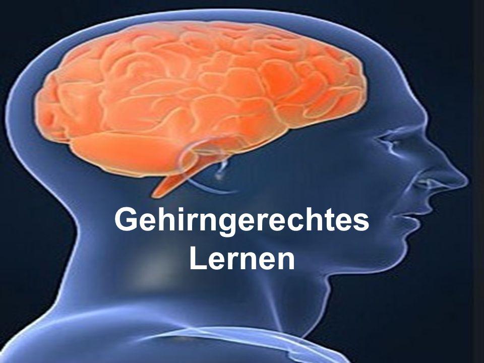 Gehirngerechtes Lernen