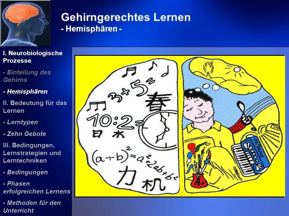 Gehirngerechtes Lernen - Hemisphären - I. Neurobiologische Prozesse - Einteilung des Gehirns - Hemisphären II. Bedeutung für das Lernen - Lerntypen -