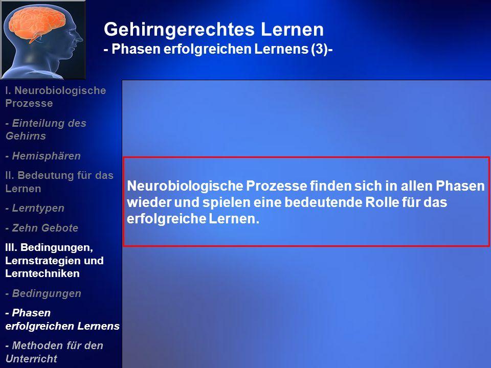 Gehirngerechtes Lernen - Phasen erfolgreichen Lernens (3)- Neurobiologische Prozesse finden sich in allen Phasen wieder und spielen eine bedeutende Ro