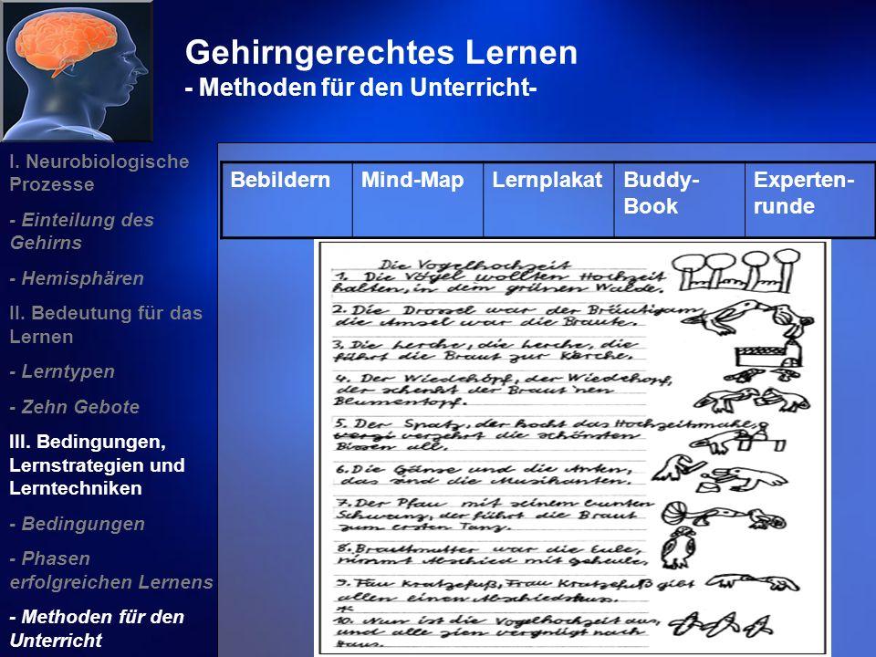 Gehirngerechtes Lernen - Methoden für den Unterricht- I. Neurobiologische Prozesse - Einteilung des Gehirns - Hemisphären II. Bedeutung für das Lernen