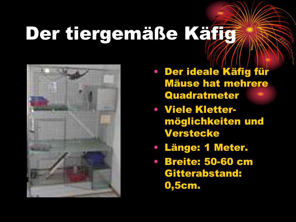 Der tiergemäße Käfig Der ideale Käfig für Mäuse hat mehrere Quadratmeter Viele Kletter- möglichkeiten und Verstecke Länge: 1 Meter. Breite: 50-60 cm G