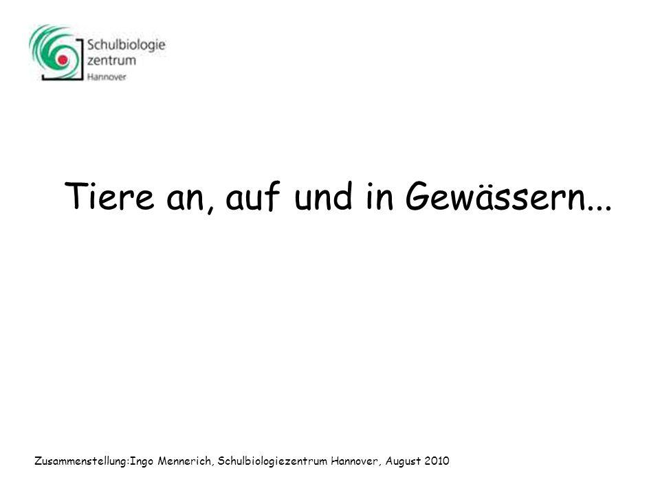 Tiere an, auf und in Gewässern... Zusammenstellung:Ingo Mennerich, Schulbiologiezentrum Hannover, August 2010