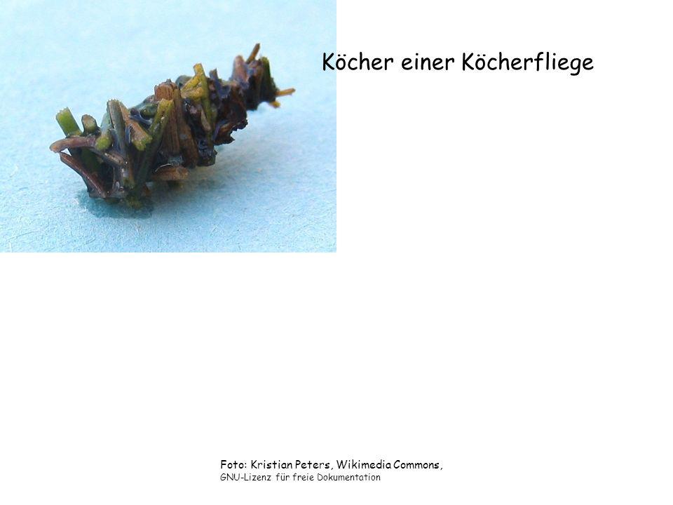 Köcher einer Köcherfliege Foto: Kristian Peters, Wikimedia Commons, GNU-Lizenz für freie Dokumentation